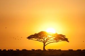 Photo: Andy Biggs Courtesy of Thomson Safaris