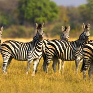 Zebras_Photo_ThomsonSafaris