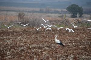 Birds_Extremadura