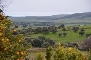 DSC_7721 extremadura countryside