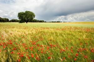 Llanos de Olivenza weblrg