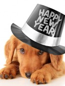 New Year's Resolutions Every Pet Parent Should Make