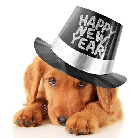 New Years Canine Co