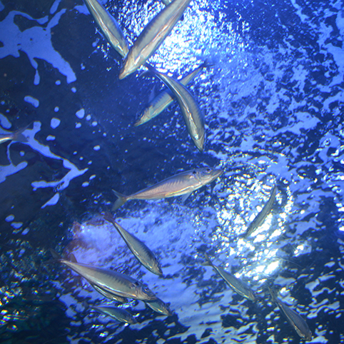 dsc_5071-acquarium
