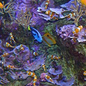 dsc_5083-aquarium-282-colorful-fish