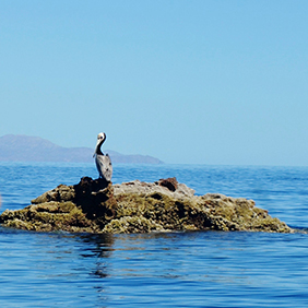 Sea of Cortez. Photo: Sloane Travel Photography