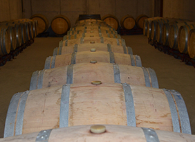 Olivardots wine cellar