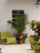 Add Instant Style with Container Gardens | Healthy Aging®