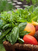 Getting Started with a Kitchen Garden