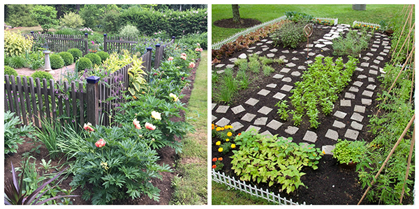 Getting Started With A Kitchen Garden | Healthy Aging®