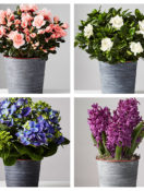 Four Plants that Make Beautiful Gifts and Interior Décor